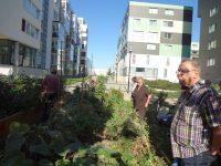 Quartiersmanagement Frankfurt In MonteLaa 20121006 152056