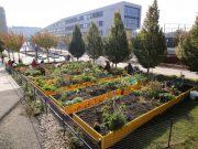 Gemeinschaftsgarten Abschlussarbeiten2011 DSC07532