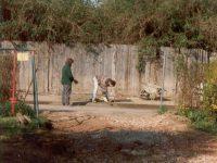 Blick Aus Der Kleingartensiedlung Auf Die Heutige Moselgasse 1997